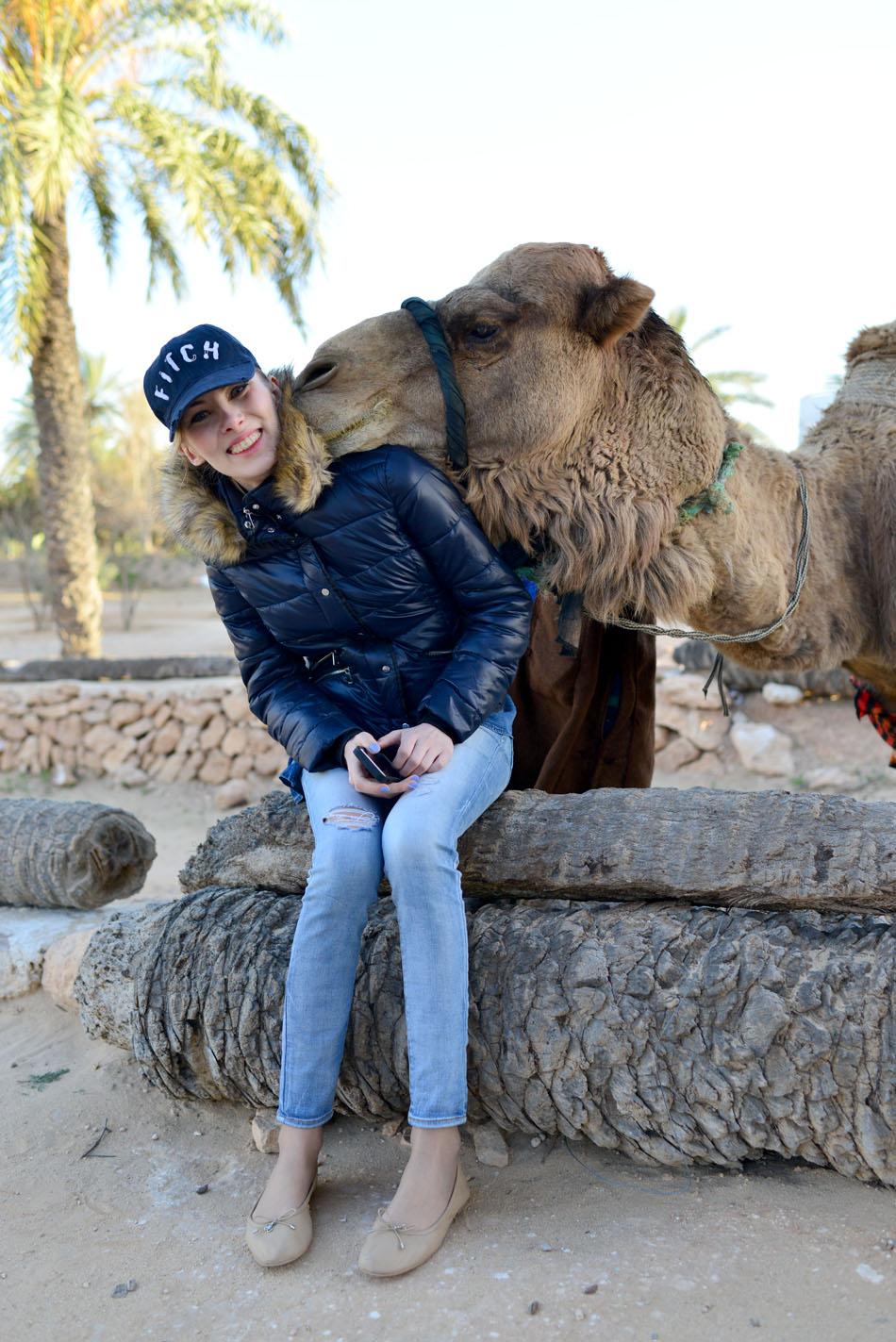 słodki wielbłąd